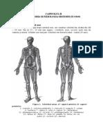 anatomie osteoporoza