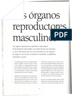 Aparato reproductor masculino y sus partes