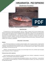 Arrain Hiruarantza - Pez Espinoso