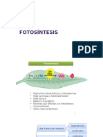 1.fotosíntesis