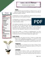 Phalaenopsis Cuidado