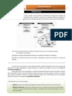 BioGeo10 Ficha de Trabalho 21-fermentação