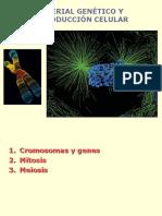 Cromosomas Mitosis Meiosis