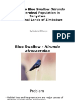 Blue Swallow Presentation