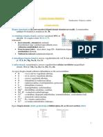 Biogenelemek Viz Lipidek Fakt