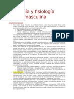 Resumen Anatomia y Fisiologia Sexual Masculina