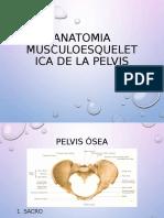 Pelvis Osea