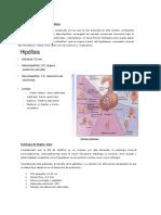 principios y apuntos rmn hiposfisis