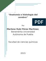 Anatomia e Histologia Del Cerebro