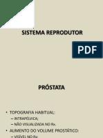 Sistema Reprodutor 1 (1)