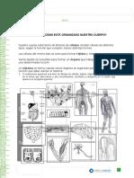 Guía Cel Curric en Línea.doc