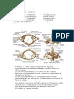 Resumo de Ortopedia