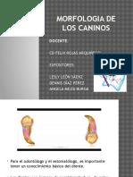 Morfologia de Los Caninos Max. y Mand..