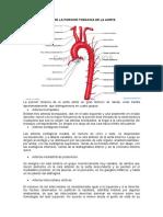 PARTE de la aorta