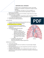 1.Anatomia Del Corazon