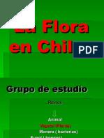 FLORA De CHILE