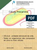 Evolução_Eucariontes_Procariontes
