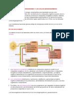 Los Microorganismos y Los Ciclos Biogeoquímicos