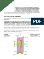 Anatomia Corporal
