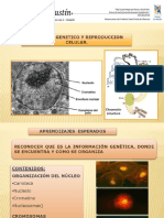 Ppt Herencia y Adn