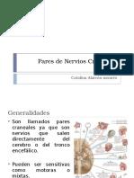 Pares de Nervios Craneales