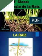 8_ Clase Histologia Raiz