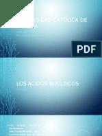 Ácidos Nucleicos ADN