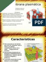 La Membrana plasmática.pptx