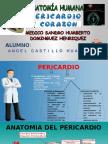 Corazon y Pericardio