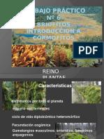 Botanica Briofitos Intr. Cormofitos