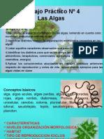 Botanica Algas