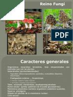 Botanica Reino Fungi