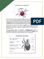ectoparasitosANATOMÍA2.docx