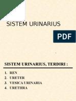 Sistem Urinarius Jil 09