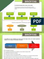 Briófitas (1) (1)