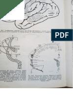fisiologia corteza cerebral.docx