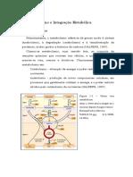 Trab Acad - Metaboismo e Integracao Metabolica 1301616