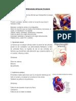 Enfermedades Sistema Circulatorio