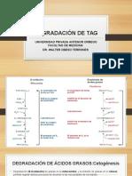 Degradación de Tag y Cetogenesis & Cetolisis.