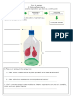 Guía de Trabajo Sistema Respiratorio