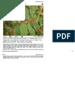 Medicinal Plants of India1 2