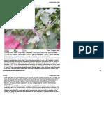 Medicinal Plants of India11