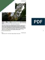 Medicinal Plants of India4