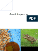 Genetic Engineering Senior Grad Project