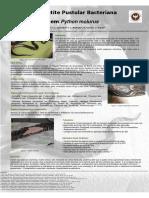dermatite serpente