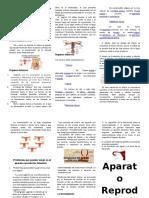 212958725-Aparato-Reproductor-Femenino-TRIPTICO.docx