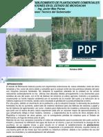 Proyecto para el establecimiento de plantaciones comerciales y reforestaciones.pdf
