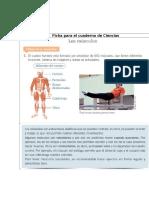 Ficha Para El Cuaderno de Ciencias Músculos