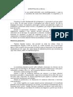 Estructura de La Célula (Vattuone)
