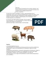 Descripcion de clases de Animales Mamiferos